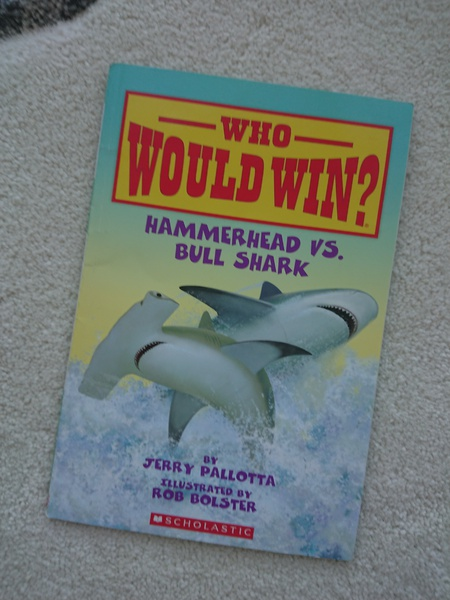 Hammerhead vs. Bull Shark (Who Would Win?)